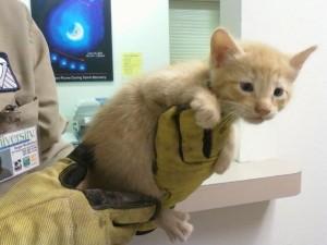 Deimos, HiRISE ceiling cat.